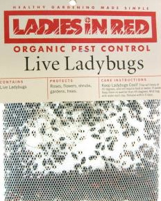 how to get rid of ladybugs in home